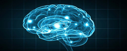 Understanding Brain Mechanisms Of >> Understanding The Brain Mechanisms Involved In Alcohol Use And